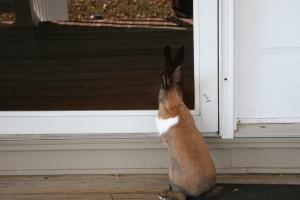 Lily Lou the pet rabbit comes for a visit.