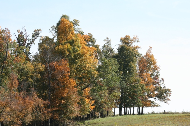 A tree line